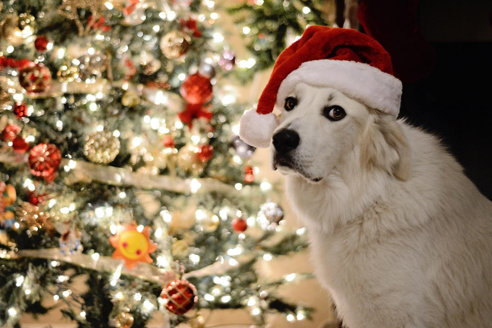 GPRA – Happy Holidays
