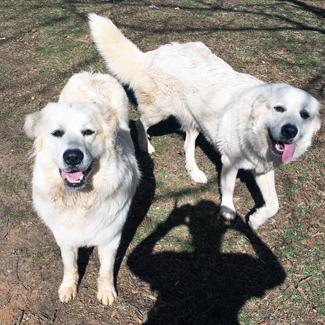 Dakota & Maya