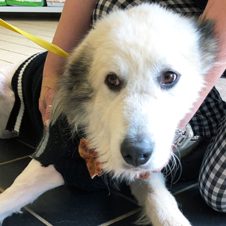Ghost C – NEEDS FOSTER