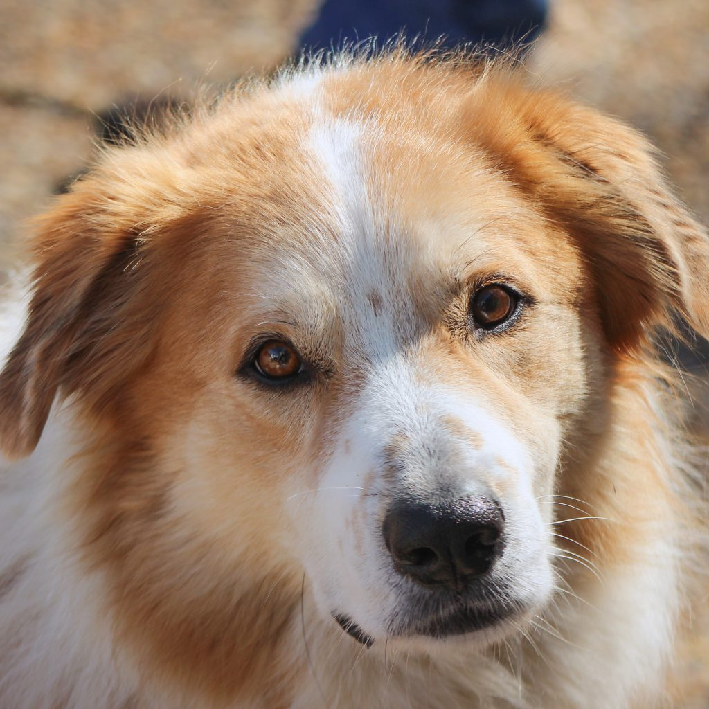 Chase – NEEDS FOSTER